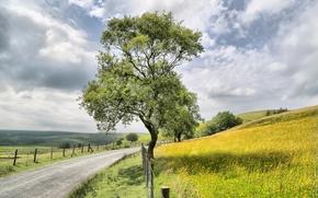 Hills, carretera, árboles, paisaje