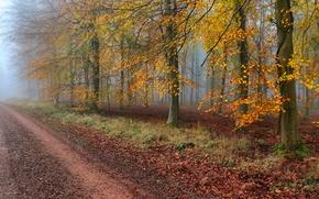 autumn, road, fog, trees, landscape