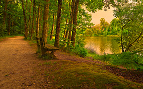 park, forest, road, lake, trees, A bench, landscape