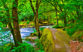 лес, река, деревья, камни, природа