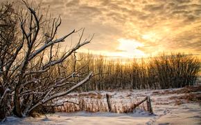 фотокартина, печать на холсте на заказ Украина ArtHolst закат, зима, деревья, пейзаж
