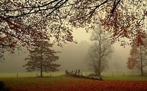 фотокартина, печать на холсте на заказ Украина ArtHolst осень, поле, деревья, туман, пейзаж