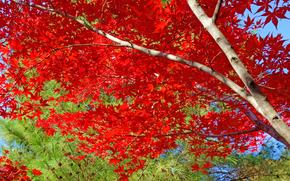 фотокартина, печать на холсте на заказ Украина ArtHolst осень, деревья, природа