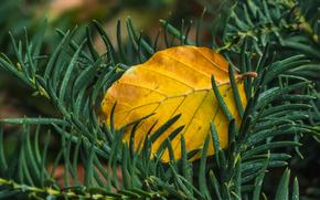 фотокартина, печать на холсте на заказ Украина ArtHolst ветки, иголки, лист, осень, макро