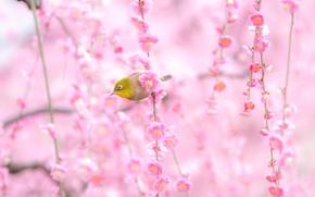 花卉, 鸟, 宏
