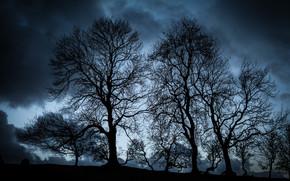 NUVENS, paisagem, ?rvores, noite