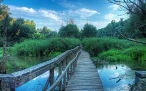 swamp, bridge, trees, landscape