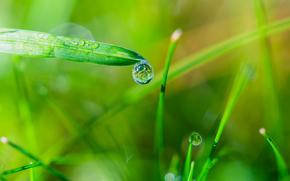 трава, роса, капли, макро
