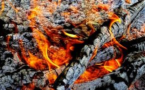 фотокартина, печать на холсте на заказ Украина ArtHolst огонь, угли, костёр, пепел, зола, пламя