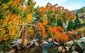 осень, река, деревья, камни, пейзаж