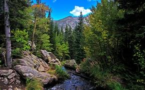 Parque Nacional de las Montañas Rocosas, río, Montañas, bosque, Rocas, árboles, otoño, paisaje