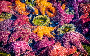 Colored Starfish, Laguna Beach, California