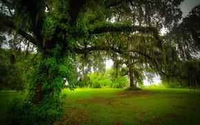 radura, alberi, natura