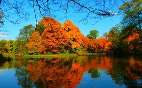 lac, toamnă, copaci, peisaj
