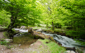 river, forest, trees, nature