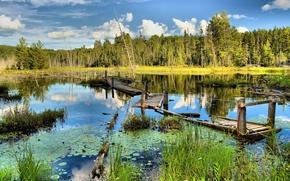 деревья, пейзаж, старый сломанный мост, заболоченная река
