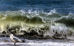 sea, waves, seagull, nature