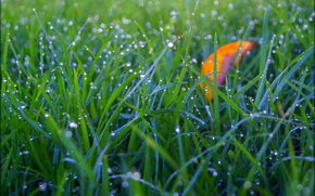 hierba, rocío, gotas, Macro