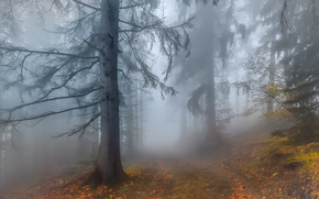 autumn, forest, road, fog, trees, landscape