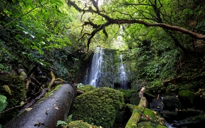 forest, waterfall, trees, stones, moss, nature