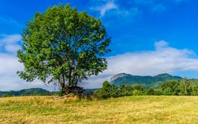 campo, árbol, paisaje