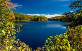 Nova Iorque, Lake Rockwood, Adirondack Parque, Rockwood Lake, outono, lago, ?rvores, RAMO