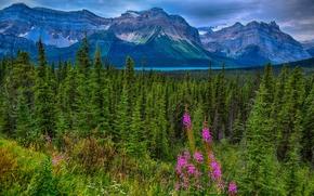 Lago Hector, Waputik Gamma, Montagne Rocciose del Canada, Parco nazionale Jasper, Alberta, Canada, Lago Hector, Ridge Vaputik, Le Montagne Rocciose, Parco nazionale Jasper, Alberta, Canada, Montagne, foresta