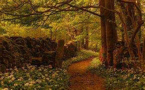 Silverdale, Lancashire, england, Silverdale, Lancashire, England, forest, footpath, trees, Flowers