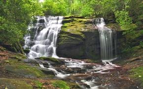 forêt, arbres, cascade, Rocks, nature