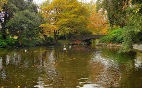 秋, 池塘, 桥, 公园, 树, SEAGULLS, 景观
