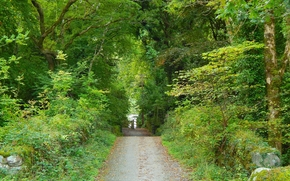 forêt, parc, arbres, route, paysage