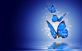 butterflies, бабочки, 3d