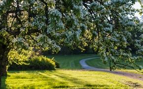 Suecia, Suecia, PRIMAVERA, árbol, floración, flores