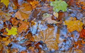 秋, 葉, 水, 自然