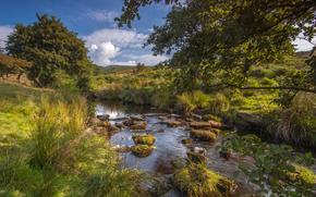 Burbage Brook, Padley Gorge, Longshaw Estate, Peak District National Park, Derbyshire, Inglaterra, Río Brook Berbedzh, Distrito de los Picos, Derbyshire, Inglaterra, río, pequeño río, árboles