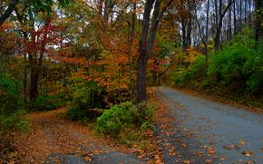 autumn, forest, trees, road, landscape