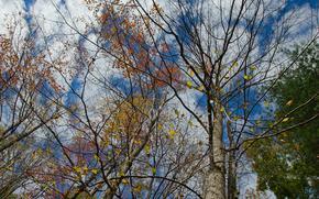 осень, деревья, небо, природа