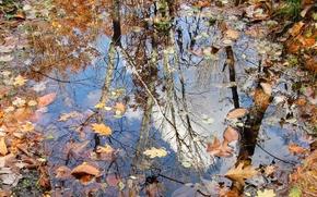 осень, лужа, листья, природа