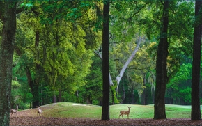 parque, Hills, árboles, ciervo, paisaje