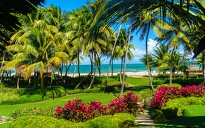San Juan, Puerto Rico, more.bereg, Palme, spiaggia