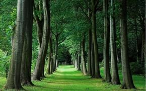 ALLEY, lawn, park, trees, landscape