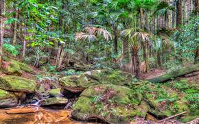 Strickland State Forest, on the Central Coast of New South Wales, Australia