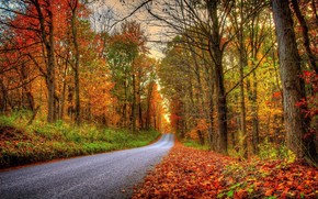 autumn, road, forest, park, trees, landscape