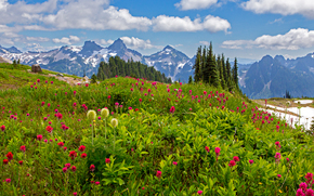 雷尼尔山国家公园, gory.derevya, 花卉, 景观