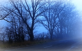 road, DAWN, fog, trees, landscape