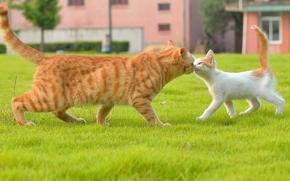 COTE, gatto, gattino, conoscenza