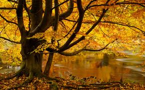 Wharfedale, Yorkshire Dales, Abbey Bolton, North Yorkshire, Strid Madeira, Inglaterra, Varfideyl, outono, rio, ?rvore, folhagem