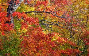 RAMO, folhagem, ?rvores, outono