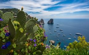 Mar Tirreno, It?lia, Capri, Jardins de Augustus, mar, costa, Rochas, Iate, cacto, Flores, panorama