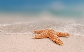 морская звезда, вода, песок